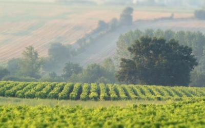 Balade et dégustation dans nos vignes
