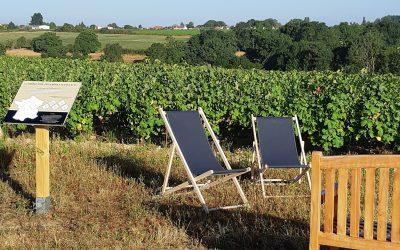 Balade et pique-nique dans nos vignes
