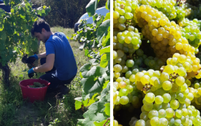 Harvest 2020 : An exceptional year !